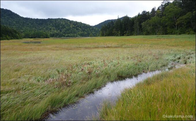 尾瀬の湿原