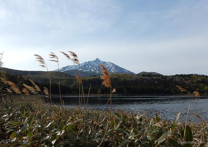 オタトマリ沼と利尻山