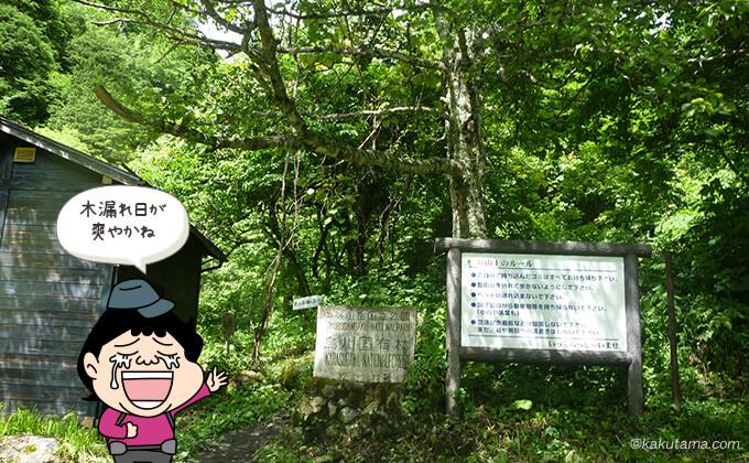 木漏れ日の中の登山道