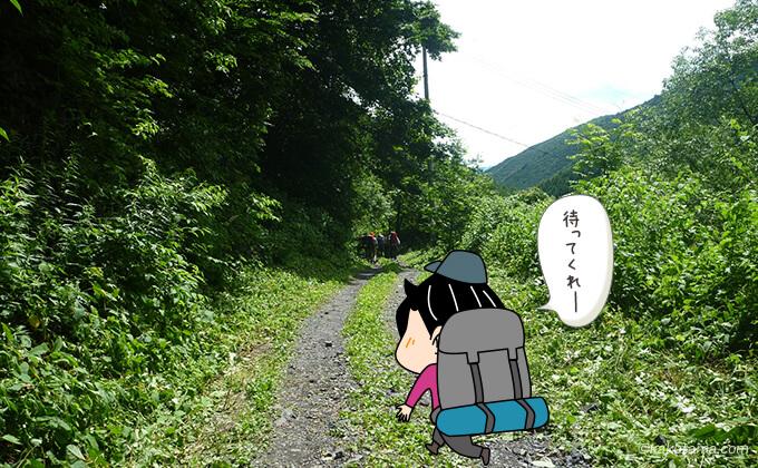 晴天下の林道