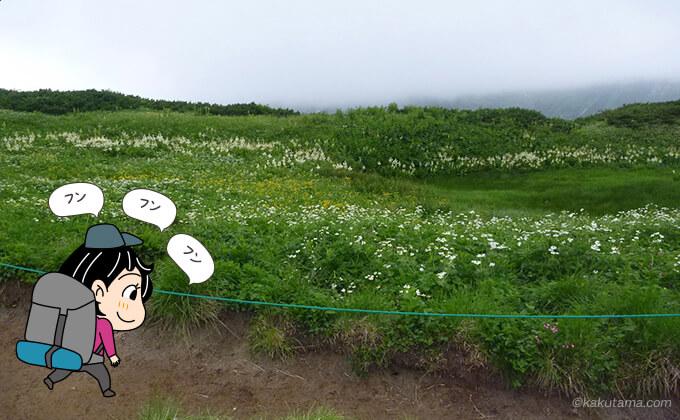 お花畑の脇を通る