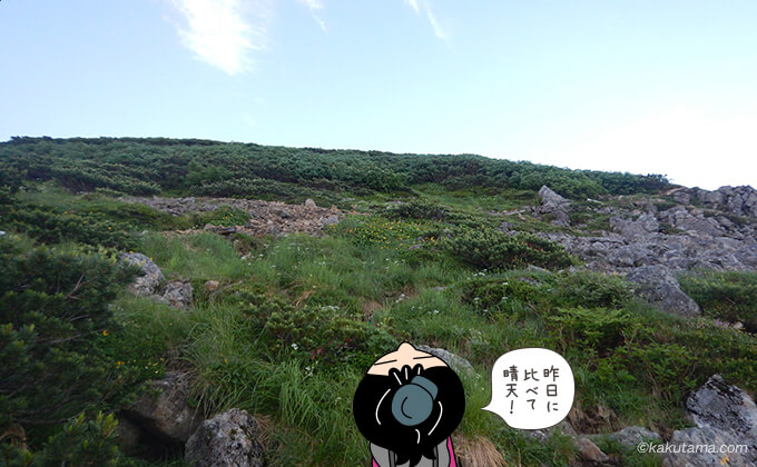 高山植物もたくさん
