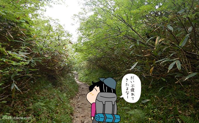 木に覆われた道