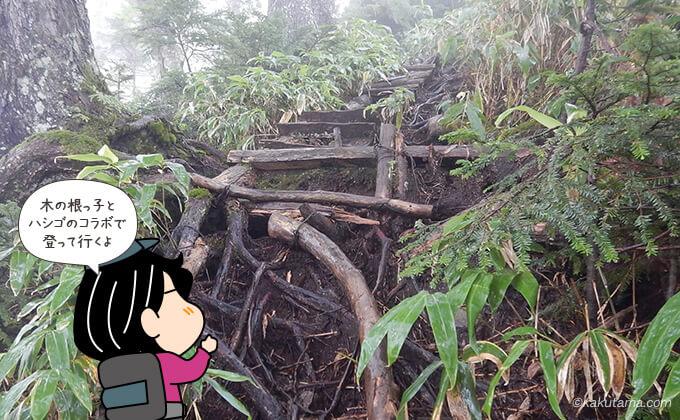 木の根っ子とはしご