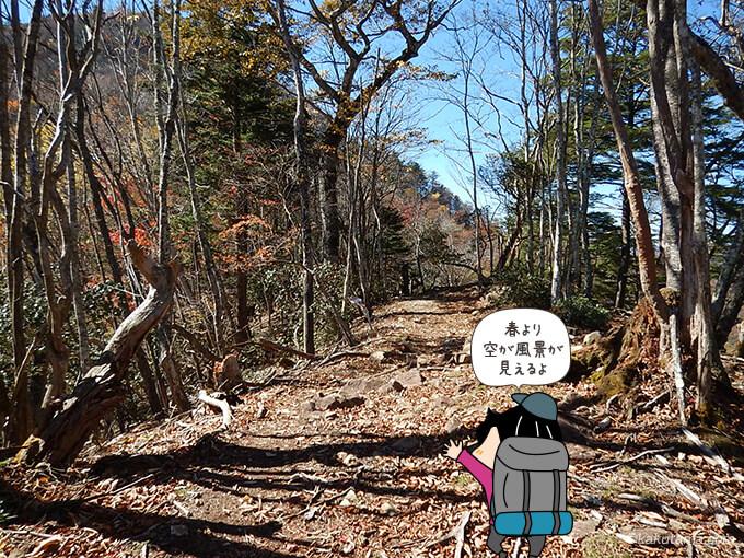 稲村岩尾根から見る鷹ノ巣山