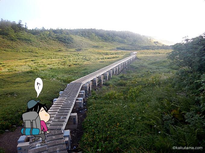 栂海新道に入ると湿原が広がる