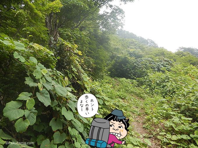 菊石山の登山道2
