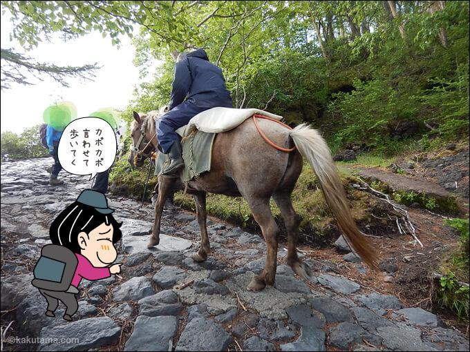 登山道を登る馬