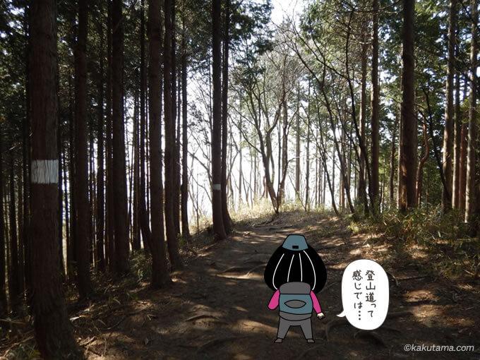 木々に囲まれた道1