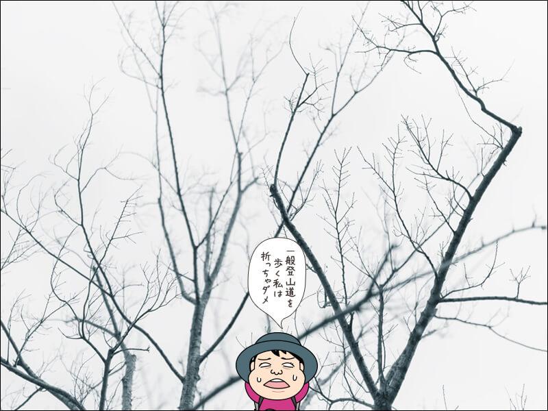 登山用語「枝折り」