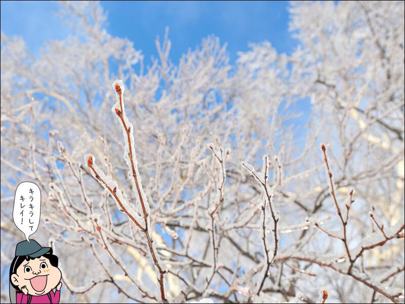 登山用語雨氷の写真