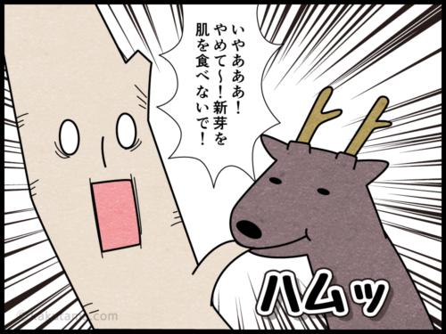 登山用語白骨林にまつわる4コマ漫画3