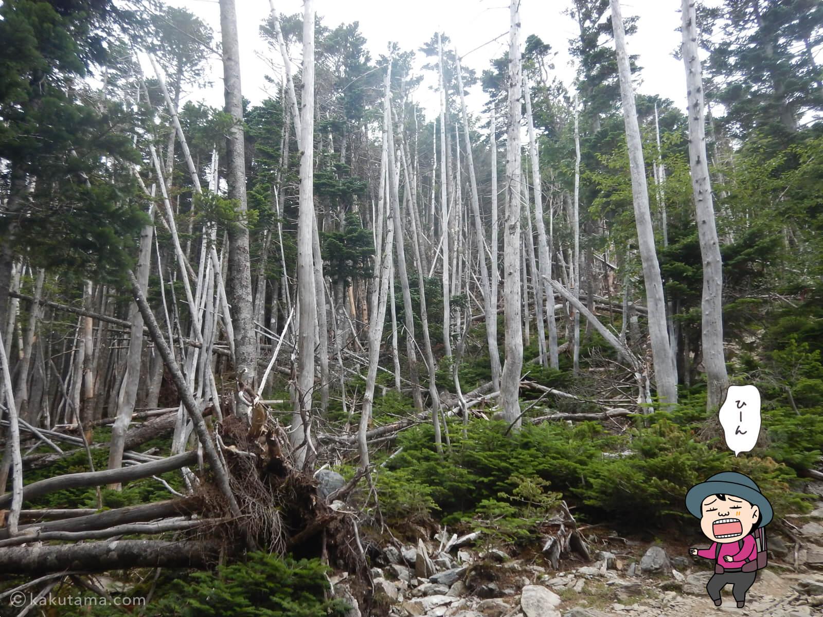 白骨林の写真