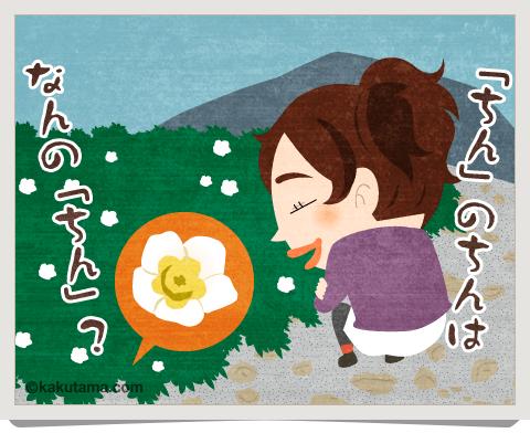 登山用語「チングルマ」のイラスト