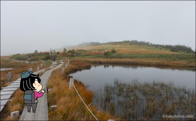 苗場山の湿原