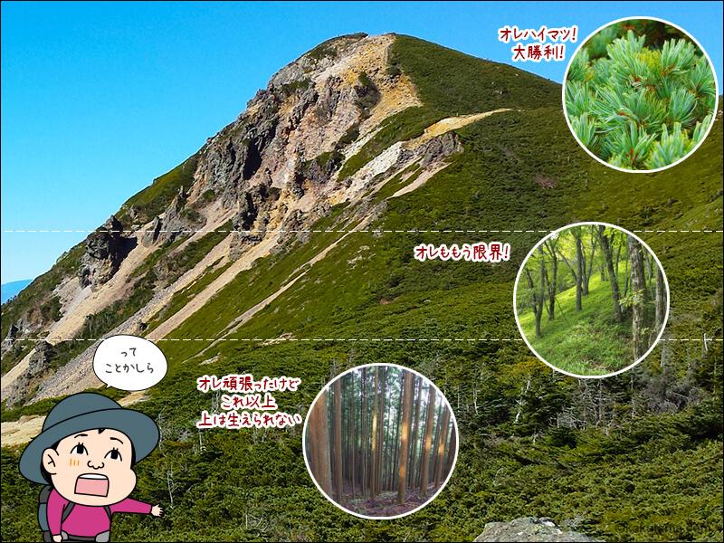 登山用語森林限界の説明図