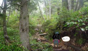 人の居ない登山道