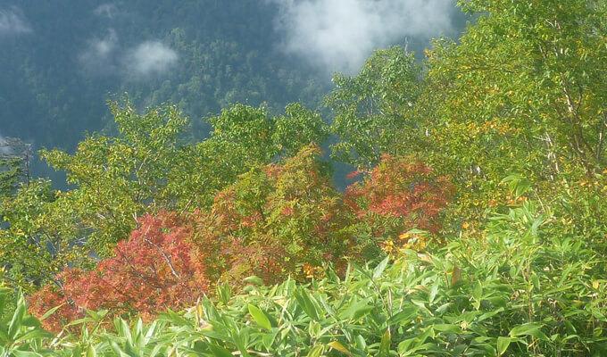 紅葉が始まった