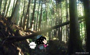 大倉尾根の木々と倒れている木
