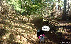 穏やかな大倉尾根登山道