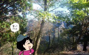 大倉尾根を楽しく登る