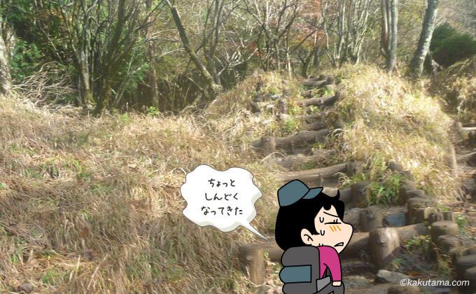 大倉尾根まだまだ続く登り