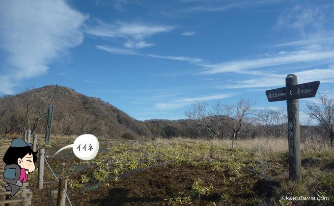 大倉尾根の林道