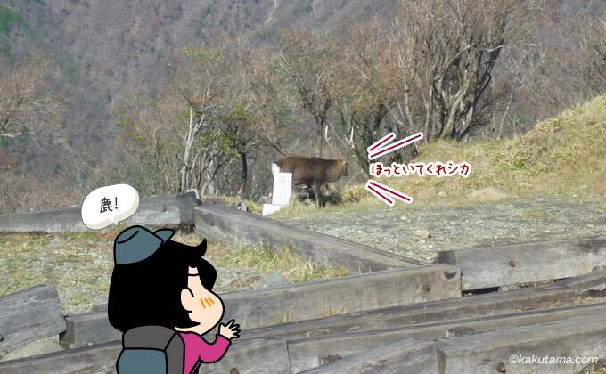 塔ノ岳山頂の鹿