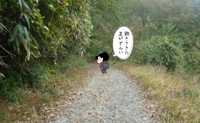 林道歩き3