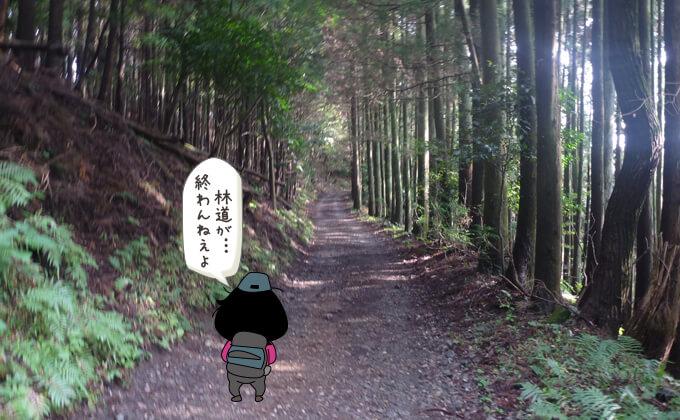 林道歩き6