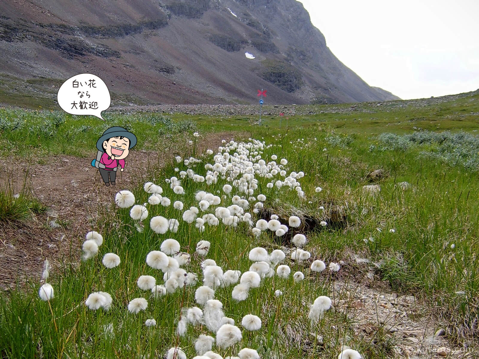 登山用語お花摘みにまつわる写真