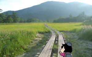 尾瀬の木道
