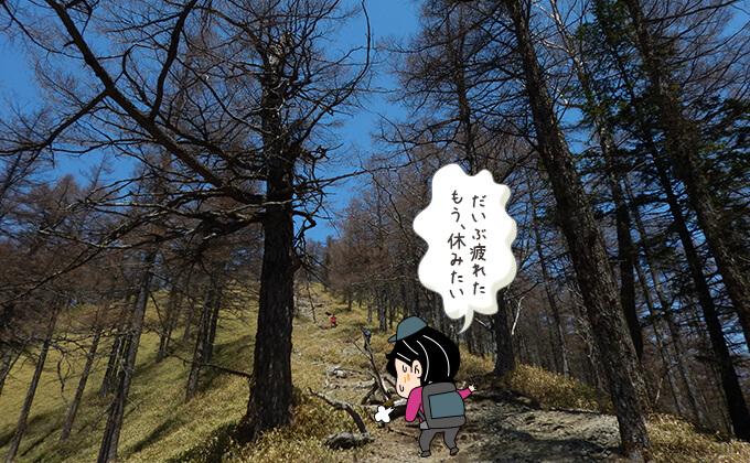 続く林道歩き