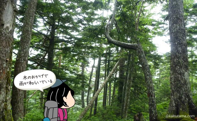 樹林帯に囲まれた登山道