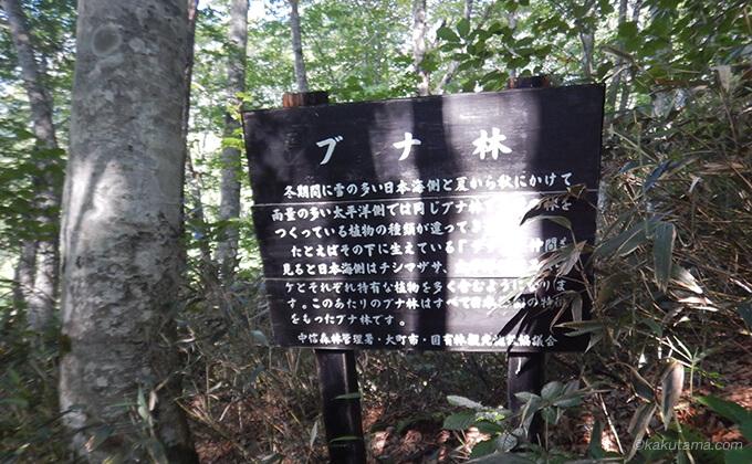 ブナ林の看板