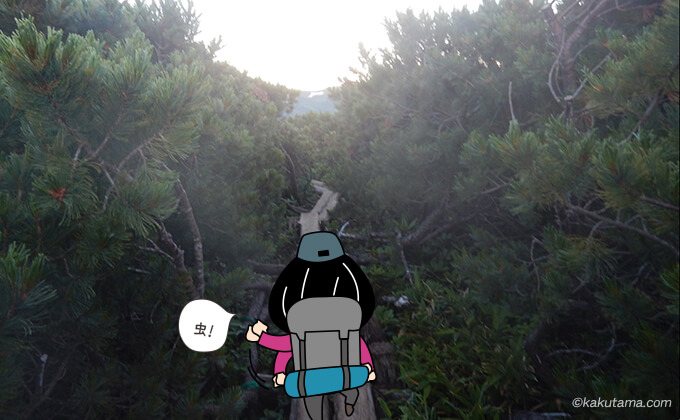 生い茂る木道