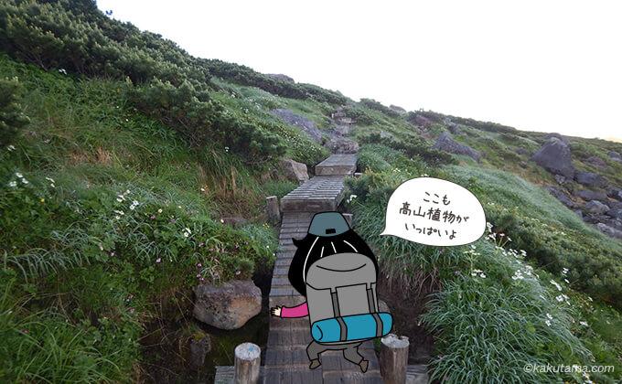 祖父岳への登り木道1