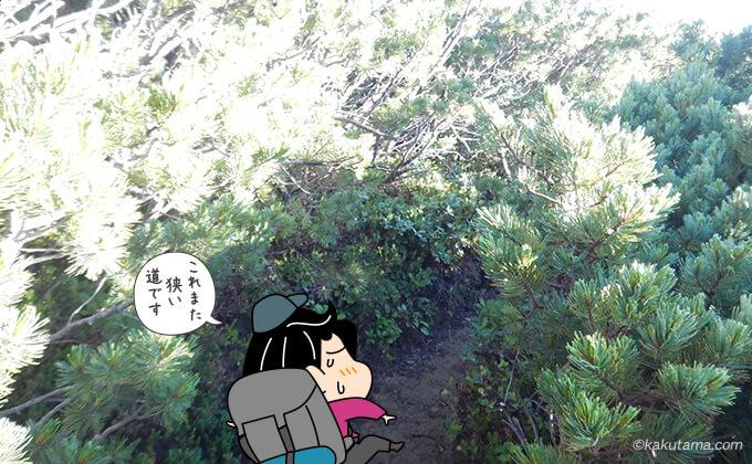 祖父岳山頂から岩苔乗越への下り道