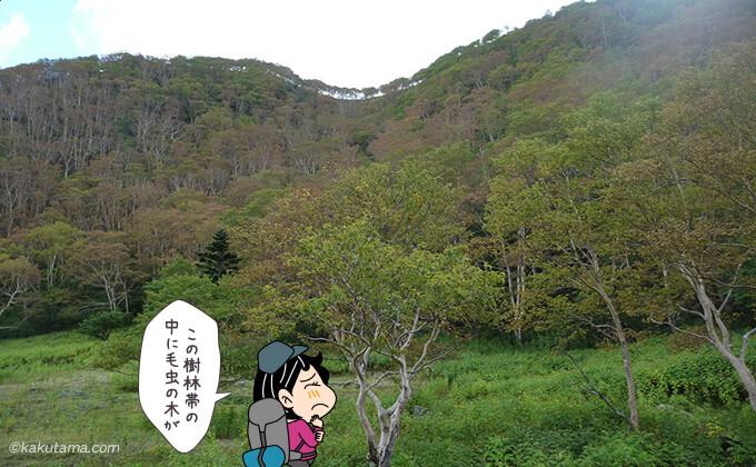 この樹林帯の中で毛虫の木にあった