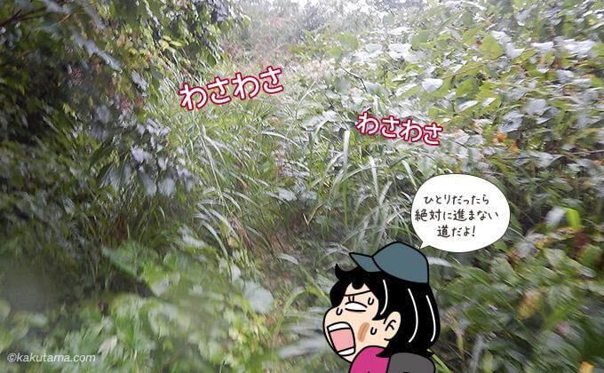 奥丸山の登山口は草で覆われ歩きづらい