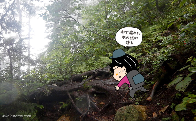 木の根っ子が現れる