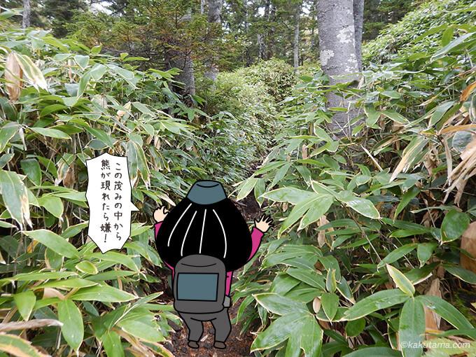 熊笹の茂み