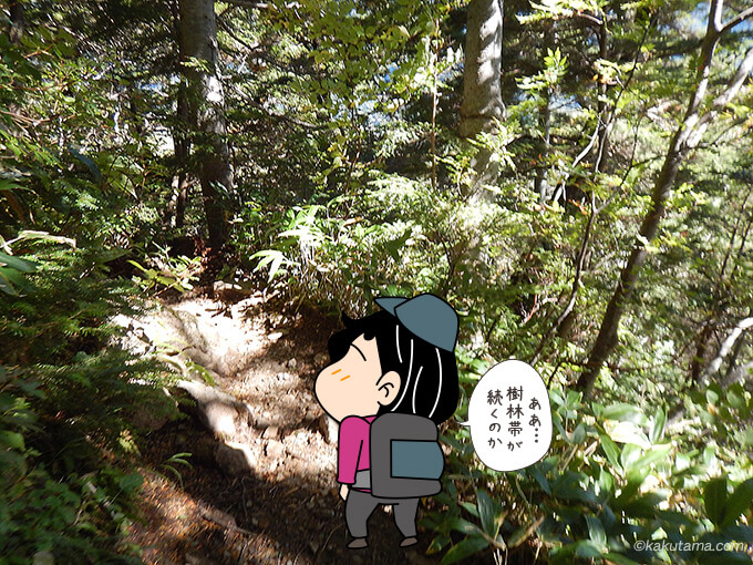 樹林帯が続く