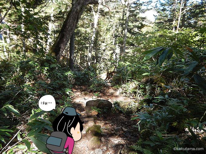 樹林帯に飽きた