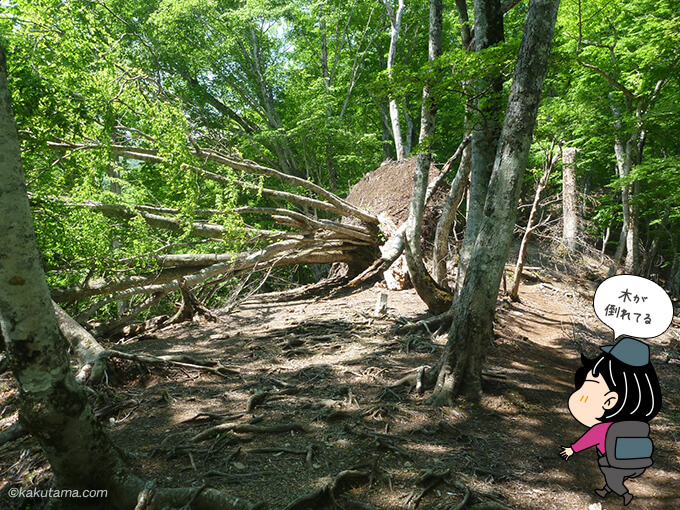 大きな木が倒れている