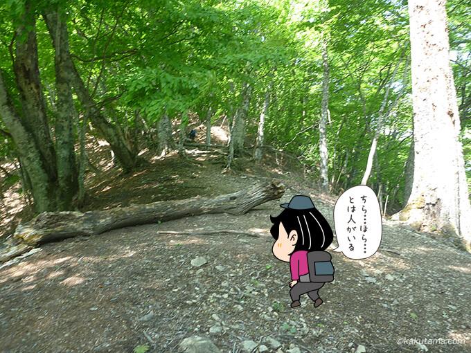 そのまま稲村岩尾根を登る