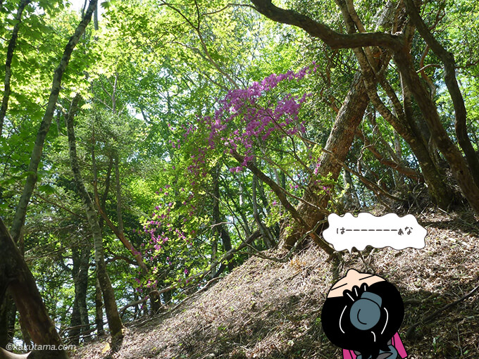 紫の花が咲いていた稲村岩尾根