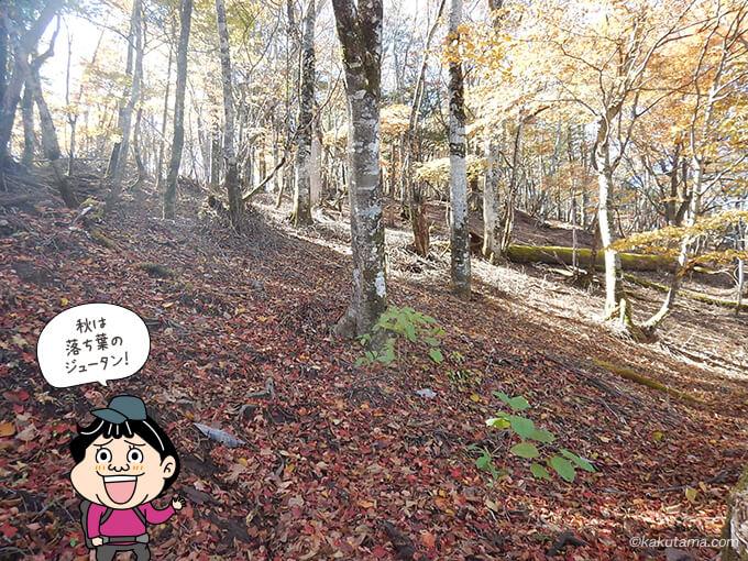 落ち葉の絨毯の稲村岩尾根