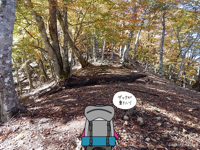 稲村岩尾根を登る