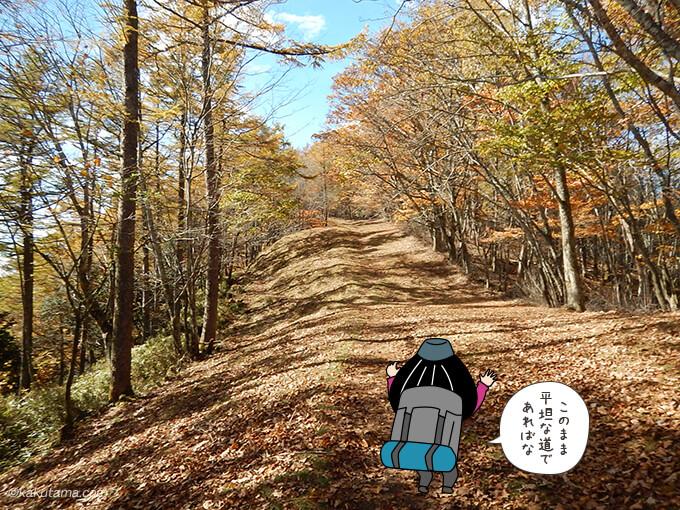 落ち葉の縦走路が広がる